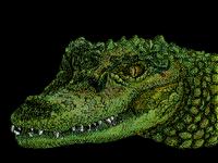 Crocodoöolé