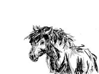 Quick pony sketch