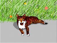 Cat of Cyprus