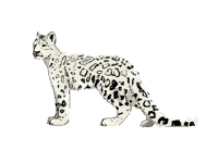 realistic snow leopard :,)