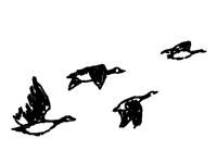 Flying goose2