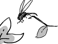 Bugfrug