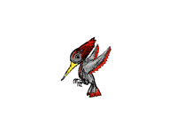 Bird: Woodpecker