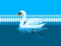 Swan Swim Swom