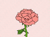 Ephemeral pink_Rosa efímero