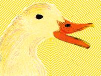 Duck Loves rñ illusions