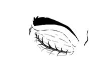 Eye animation loop