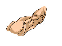 How I draw and shadow muscles