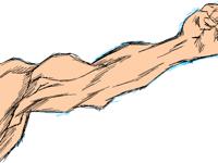Arm sketch