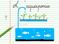 L'aquaponie