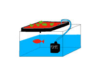 How to make an ecologic aquaponic system