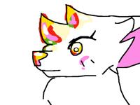 ranbow cat