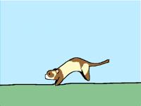 Ferret run