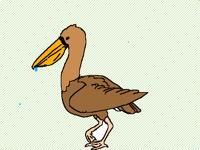 Pelicans We