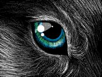 Wolf eye- eye of lonely