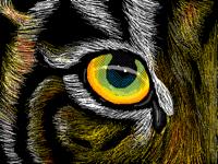 Tiger eye- eye of wild