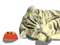 Kitty Realistic