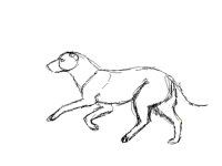 Run/gallop practice XD