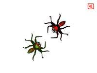 Jumping spider fight