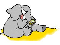 Éléphant VS Smartphone
