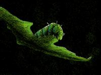 caterpillar b o i