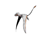 dimorphodon flying cycle
