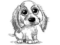 Little dog (a study)