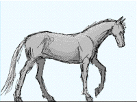 Horse [walk cycle]