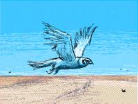 Falcons// [practice]