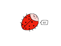 Rainbow Ladybug