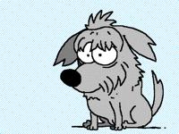 Buccia the dog