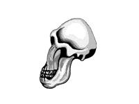 evolution of the skull